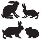 野兔 免版税图库摄影