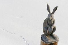 野兔 库存照片