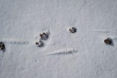 野兽的标记 库存图片