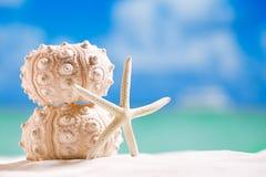 野孩子与海洋的壳海星,白色沙子海滩的 免版税库存图片
