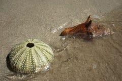 野孩子和壳在海滩在沙子 免版税库存照片