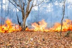 野火在热带森林,泰国里 免版税库存照片
