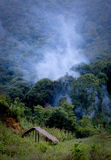 野火烟在森林里 库存图片