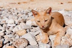野猫希腊 免版税图库摄影