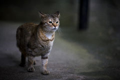 野猫 图库摄影