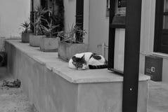 野猫 免版税库存图片