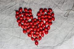 从野玫瑰果/野蔷薇的心脏 免版税库存图片