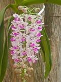 野生兰花在泰国的森林里 免版税库存图片