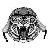 野生动物佩带的摩托车盔甲的老虎手拉的图象T恤杉的,纹身花刺,象征,徽章,商标,补丁 免版税库存照片
