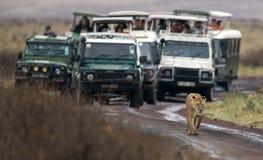 野生动物和人们 库存图片