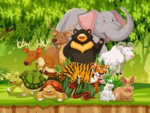 野生动物在森林里 皇族释放例证