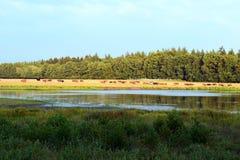 野生动物在森林里 图库摄影
