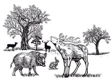 野生动物在沼地 免版税库存图片