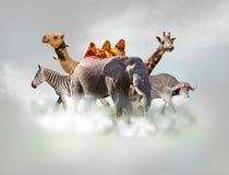 野生动物小组-长颈鹿,大象,在白色云彩上的斑马在灰色天空 免版税库存照片