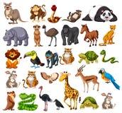 野生动物的不同的类型在白色的 库存例证