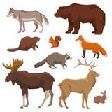 野生动物绘了象集合 库存例证