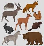 野生北森林动物设置了,猬,浣熊,灰鼠,鹿,狐狸,野兔,海狸,狼,在a的传染媒介例证 库存照片