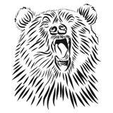 野生北美灰熊,手拉的传染媒介咆哮熊 皇族释放例证