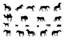 野生和家畜剪影。黑色&白色。 库存图片