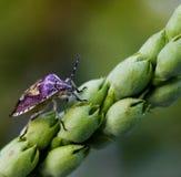 野生昆虫 库存照片