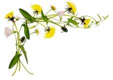 野生植物、蒲公英和雏菊花和叶子在壁角arran 库存图片