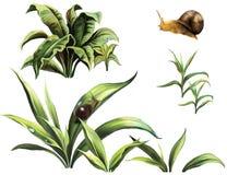 野生植物和蜗牛 免版税库存照片