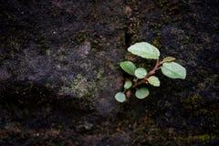 野生植物特点  免版税库存照片