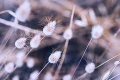 野生植物的宏观图象 库存照片