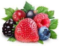 野生浆果的收集与叶子的 免版税库存照片