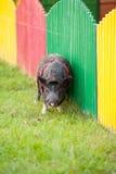 野生猪在公园 免版税库存图片