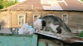 野生猫探索的垃圾大型垃圾桶 影视素材