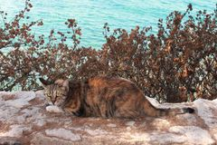 野生猫 免版税库存照片