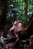 野生猴子在密林3 免版税库存图片