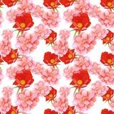 野生玫瑰无缝的样式 免版税库存照片