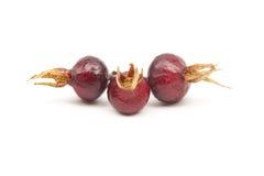 野生玫瑰色浆果 库存照片