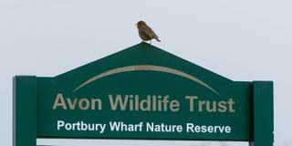野生生物与罗宾的信任标志 免版税图库摄影