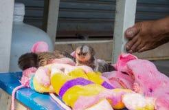 野生生物保护 免版税库存照片