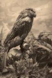 野生生物场面-野生生物场面 免版税库存照片