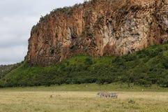 野生生物斑马在非洲 图库摄影