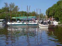 野生生物游览小船 库存图片
