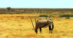 野生生物的储蓄图象在非洲国立公园 库存照片