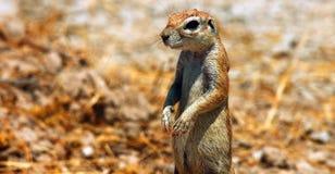 野生生物的储蓄图象在非洲国立公园 免版税库存照片
