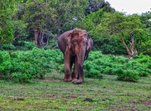 野生生物的Yala国家公园在斯里兰卡 免版税库存图片