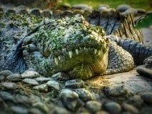 野生生物相关照片 照片点击动物园 免版税库存图片