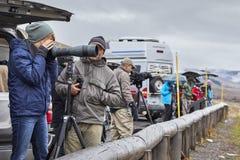 野生生物看守人观察狼牧群在一个冷的雨天 免版税库存照片