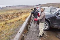野生生物看守人观察狼牧群在一个冷的雨天 库存图片