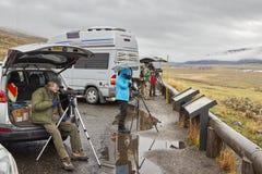 野生生物看守人观察狼牧群在一个冷的雨天 免版税库存图片