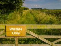 野生生物仅自然保护 库存照片
