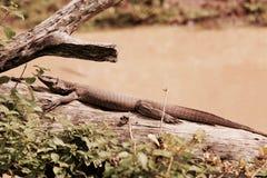 野生生物 库存图片