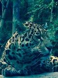 野生生物 免版税库存图片